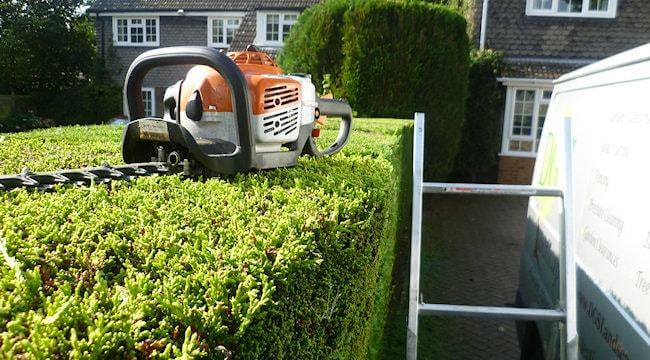 Linley Point Hedge Trimming