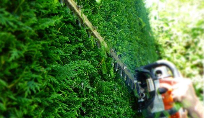 Hedge Trimming Services In Northern Suburbs