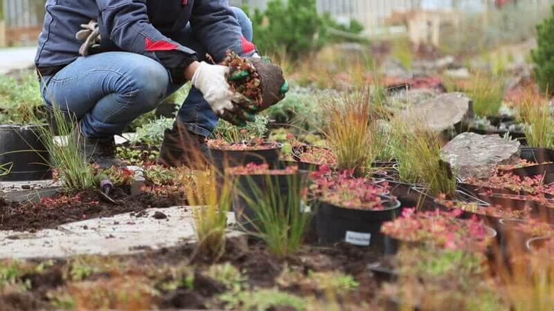 Garden Planting Services In Linley Point