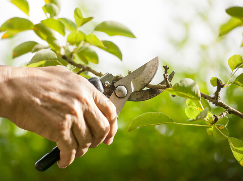 Seasonal Garden Maintenance Services In Lidcombe