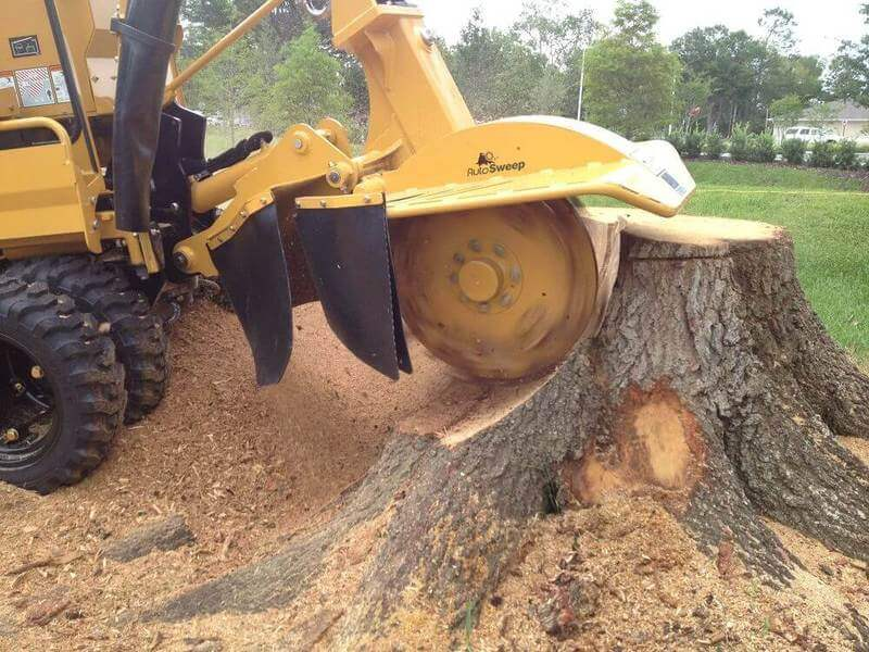 Stump Grinding Crows Nest