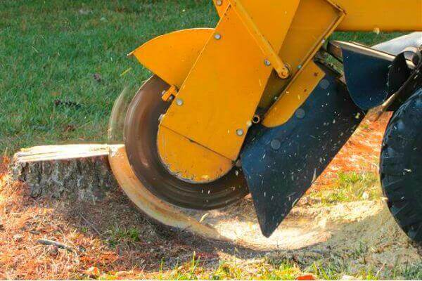 Crows Nest Stump Grinding