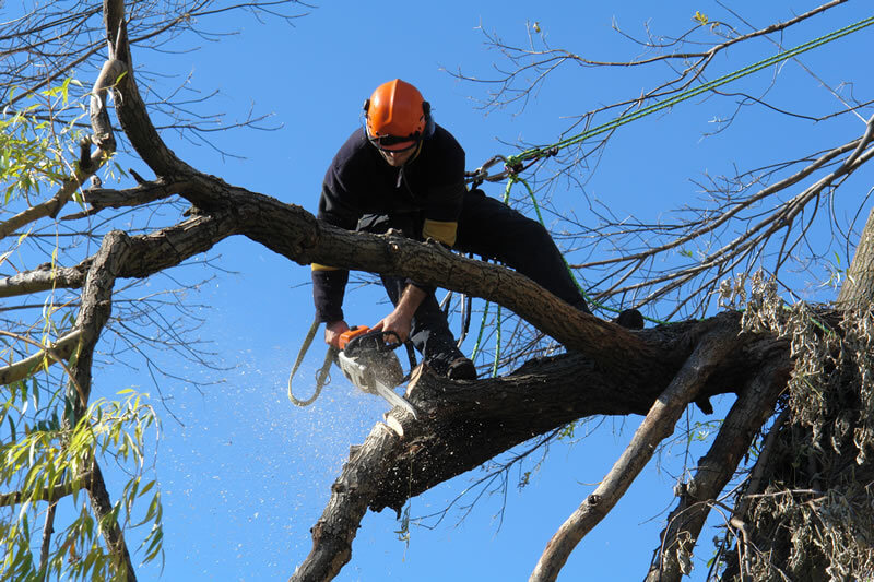 Tree Pruning Crows Nest