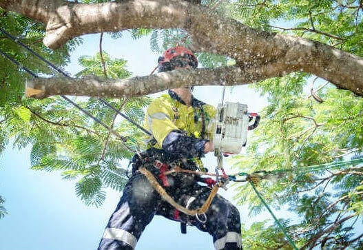 Tree Pruning Linley Point