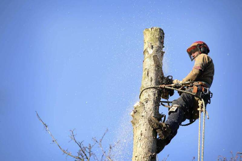 Tree Services Lidcombe