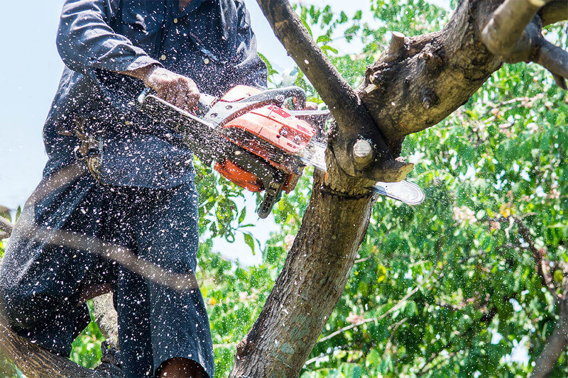 Tree Trimming Services In Lidcombe